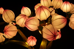 Blossoms - China Light - Antwerp Zoo (Christine P.v.B.) Tags: zoo belgium belgique bloesems blossoms illuminations belgi antwerp antwerpen anvers flanders vlaanderen blossomingtree lightfestival verlichting flandre lichtkunst lichtfestival chinalight arbresfleuris
