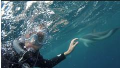 Dolphins at Kaikora