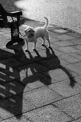Day #2581 (cazphoto.co.uk) Tags: shadow dog monochrome bench mono waiting shadows geocaching pavement seat essex coggeshall project365 canon24105mmeff4lisusm 240115 canoneos5dmkiii beyond2557