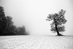 IMG_0998-2 (simongoode25) Tags: snow landscapes fields awesometrees