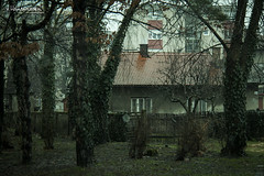 Does anybody lives in here? (v.Haramustek) Tags: old trees house green rain vintage osijek croatia haunted creepy spooky