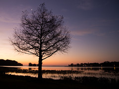 before sunup on Lake Harris (William Miller 21) Tags: tree nature silhouette sunrise canon florida leesburg predawn t3i lakeharris tamron1750