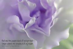 Purple Dusk of Twilight (linda.addis) Tags: stardust odc ourdailychallenge