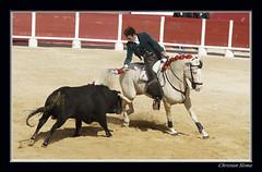 _DSC0079 - Copie (chris30300) Tags: france les cartagena corrida toro palavas rejon palavaslesflots flots languedocroussillonmidipyrnes languedocroussillonmidipyrn