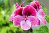 IMG_7273 (Alessandro Grussu) Tags: flowers plant flower macro 20d canon pflanze blumen fiori blume fiore pianta