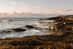 Seaweed Sunset (mdentremont) Tags: dof novascotia landscape sunset nature water d5500 oceanscape sea seaweed beach ocean blur depthoffield atlantic nikon seascape outdoor coast marine halifax seabright canada ca