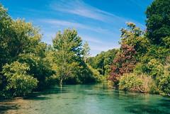 Weeki Wachee River (corran105) Tags: trees wild nature water sunshine creek river landscape woods nikon kayak florida outdoor sunny bluesky retro naturalbeauty polarizer paddling v1 gulfcoast centralflorida suncoast weekiwachee nikon1 mirrorless weekiwacheeriver naturecoast springhunters