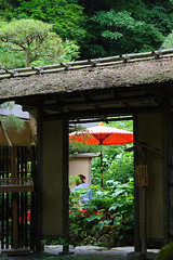 20160528-D7-DS7_3383.jpg (d3_plus) Tags: street sky plant flower building history nature japan temple nikon scenery shrine kamakura daily architectural telephoto bloom  tele streetphoto nikkor   tamron    shintoshrine  buddhisttemple dailyphoto sanctuary 28300mm   thesedays kitakamakura   28300     holyplace historicmonuments tamron28300mm  ancientcity   tamronaf28300mmf3563    a061  architecturalstructure telezoomlens d700  tamronaf28300mmf3563xrdildasphericalif nikond700   a061n