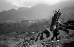 Hmong Farmer (H_H_Photography) Tags: sapa hmong farmer olympus xa trix pushprocessing 800iso v600 blackandwhite analog film 135film bw kodak ricepaddies mountains streetphotography