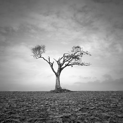 Open (Rohan Reilly Photography) Tags: ireland blackandwhite tree clouds landscape bangor northern