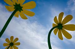 Big Blossoms (JeffStewartPhotos) Tags: park flowers toronto ontario canada flower playground stclair photowalk parkland splashpad torontophotowalk topw viellastreet torontophotowalks gunnsroad topwsc mapleclairepark tarragonaboulevard