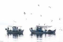 Tetralogy 4. Serenity (Siminis) Tags: morning seagulls white mist seascape reflections boats morninglight fisherman fishermen aegean sealife greece fishingboats gera morningmist mytilene aegeansea gulfofgera siminis mistyseascape