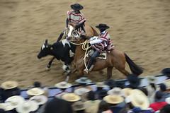 Final Champions 2016 Rancagua (Chile) (Photopinto) Tags: chile horses america nikon media chili south du luna final cavalos tradition champions sud chevaux rancagua d4 corridas 2016 huasos rodo 200400f4
