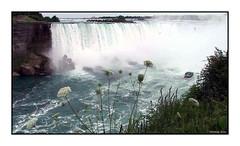 120 Niagara Falls, Ontario 2004 (DBattag) Tags: winter ice waterfalls scenary niagaraonthelake niagarafallsontario