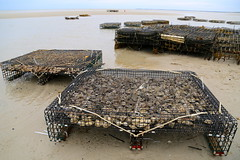 AD8A1430_p_g (thebiblioholic) Tags: orleans lowtide rockharbor 366