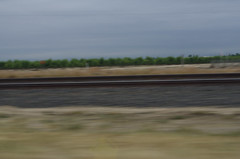 IMGP9317.JPG Good Morning Madera County California on CA99 Freeway NB (niiicedave) Tags: california morning dawn driving cloudy overcast roadtrip orchard motionblur unionpacific agriculture daybreak centralcalifornia northbound railroadtracks sanjoaquinvalley cultivated maderacounty freeway99 californiastateroute99 ca99nb greatvalleygeologicalprovince elevation285feet