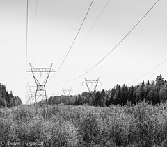 Power Lines (andres_vargas444) Tags: people birds sony sonya58 a58 telephoto nature trees vacation cold buildings stairs colours bw blackandwhite bandw animal squirrel sunset red ameture photographer teen 16 young flower haliburton canada ontario paths trails views fishing deer motercycle roads