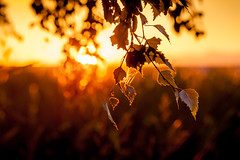 sunset leaves (michaelinvan) Tags: sunset summer blur tree nova leaves rain silhouette rural canon dusk web windy richmond f2 backlit terra 135mm 5d2