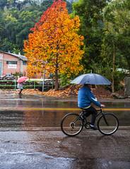 chuva (Miriam Cardoso de Souza) Tags: umbrella chuva outono sombrinha