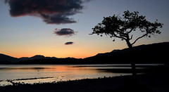 A Cloud, a Tree, a Bird (Russardo) Tags: sunset bay scotland loch lomond milarrochy