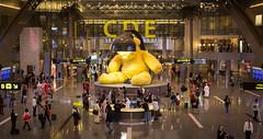Lamp Bear, Hamad International Airport, Doha, Qatar (maxunterwegs) Tags: aeroporto aeropuerto airport architecture archtitekur aroport catar doh doha flughafen hamadinternationalairport katar lampbear qatar sculpture terminal ursfischer