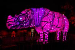Taronga Zoo Vivid 2 (RoosterMan64) Tags: lights vivid australia nsw tarongazoo