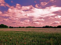 Wolkenstimmung (Wunderlich, Olga) Tags: nature landscape natur insel rgen landschaft bume deu klatschmohn lupinen