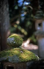 The stone lantern covered with moss in Kasuga Taisha Shinto Shrine 2016/05 No.1(taken by film camera). (HIDE@Verdad) Tags: 50mm fuji nikkor provia nikonf3 ai f12 100f