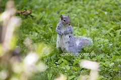 IMG_4620eFB (Kiwibrit - *Michelle*) Tags: tree grass birds woodpecker squirrel maine feeder chipmunk monmouth 2016 061916