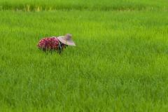 ChiangRai_8083 (JCS75) Tags: canon thailand asia asie chiangrai thailande