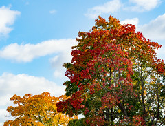 l'Autunno (Jori Samonen) Tags: blue autumn trees red sky white green fall colors leaves yellow clouds finland helsinki