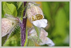 _JVA7632_DxO (mrjean.eu) Tags: park pink blue white france flower macro fleur rose yellow fleurs jaune garden rouge nikon jardin vert bleu botanic lorraine botanique parc metz 105mmf28 flowerws grteen