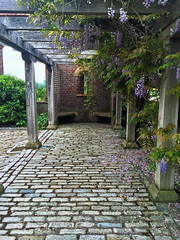 Godalming Memorial (Jainbow) Tags: phillipsmemorialcloister cloister godalming surrey jainbow wisteria