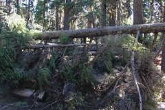 Sigh, back to trees on the trail (rozoneill) Tags: sky lake cold liza rock creek forest river spring elizabeth lakes fremont trail national wilderness rogue siskiyou winema trailhead isherwood notasha