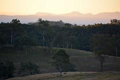 Dome Mountain (dustaway) Tags: winter landscape shadows australia nsw distance australianlandscape lateafternoon richmondrange northernrivers richmondvalley domemountain doubtfulcreekvalley trentyslane