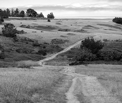 Pathway I_bw (Joe Josephs: 2,861,655 views - thank you) Tags: california blackandwhite walking hiking pinetrees californiacoast fineartphotography blackandwhitephotography californiacentralcoast cambriacalifornia travelphotography californialandscape pineforests outdoorphotography fineartprints fiscaliniranch fiscaliniranchpreserve