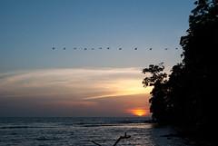 Pelcanos (Mara Paola Aguilar) Tags: ro cedro rio crdoba cordoba colombia beach playa photography fotos mariapaolaaguilarrojas paraso natural caribe mar sea