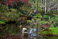 clingendael- (Arie van Tilborg) Tags: japanesegarden hague thehague clingendael japansetuin clingendaelestate landgoedclingendael arievantilborg