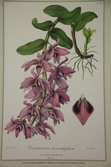 Flowers (Digital Collections at the University of Maryland) Tags: umd williammorris hornbake umdlibraries umdwayzegoose