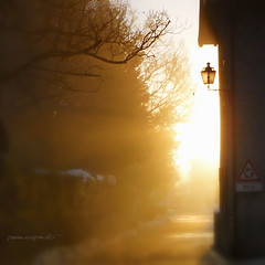 50 metri prima (pamo67) Tags: road street morning trees light lamp alberi backlight strada lantern signal luce lanterna controluce segnale mattino pamo67 pasqualemozzillo 50metriprima 50metersbefore