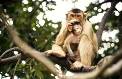 Macaque (fujinliow) Tags: wild love animal monkey monkeys kualalumpur care ampang macaque motherlove fujin motherly kualalumpurmalaysia liow fujinliow liowfujin