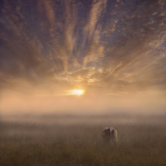 Melting Morning Skies (adrians_art) Tags: sky horses weather misty clouds sunrise foggy silhouettes marshland marshes equines
