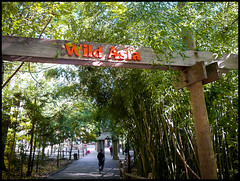 Wild Asia Signage (Hetx) Tags: wood nyc newyorkcity wild ny newyork nature zoo design gate asia path bronx wildlife entrance wcc beam bronxzoo borough recreation thebronx entry lumber outerborough bronxpark wildlifeconservationsociety zoologicalpark thebronxzoo wildasia
