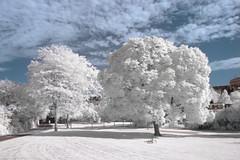 Park Trees, Cologne (most.4711) Tags: 510fav topv555 sony gimp cologne infrared dscv3 ufraw 555v5f nightshotmode hoyahmcnd8 neewerir720