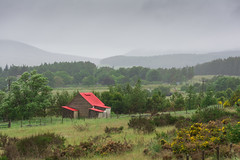The Red Roof in the Rain (smokejumping) Tags: wood roof red house verde green rain clouds scotland countryside casa highlands woods nikon nuvole tetto alba unitedkingdom cottage ceiling hills campagna fields pastures rosso pioggia aviemore caledonia inverness colline brooms legno moorland cairngorms a9 campi nubi scozia pascoli boschi 2013 ginestre brughiera d7100 sergiocanobbio