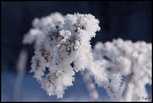 winters overcoat