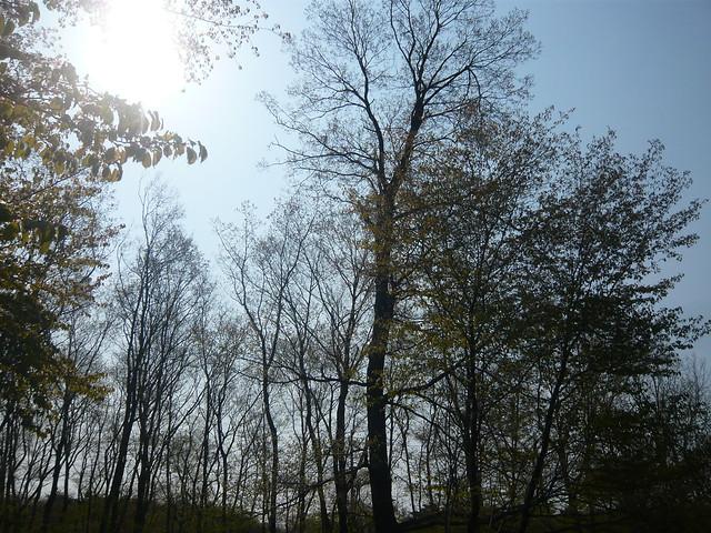 ログハウスの裏庭・バーベキュー場から見える景色|貸別荘グリーンレストハウス那須高原