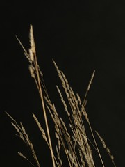 NEBELSPAZIERGANG (melan.cholerikerin) Tags: november autumn nature grass fog night dark nebel darkness nacht herbst natur lawn meadow wiese eerie spooky nighttime flashlight grassland atnight mothernature nachts grser mutternatur 2013 november2013