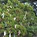 Trees_of_Loop_360_2013_039