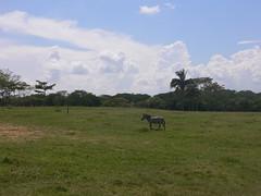 Parque Yumká (Caneckman) Tags: parque animales tabasco villahermosa natureleza yumka